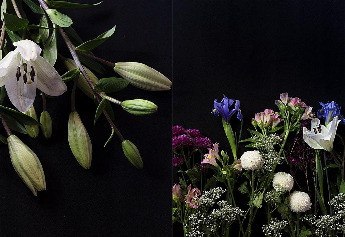 florescolor